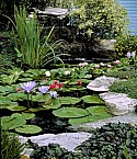 Moore Water Gardens
